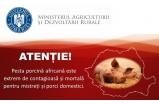 Atentie!!! Pesta porcina africana este exgtrem de contagioasa si mortala pentru mistreti si porci domestici